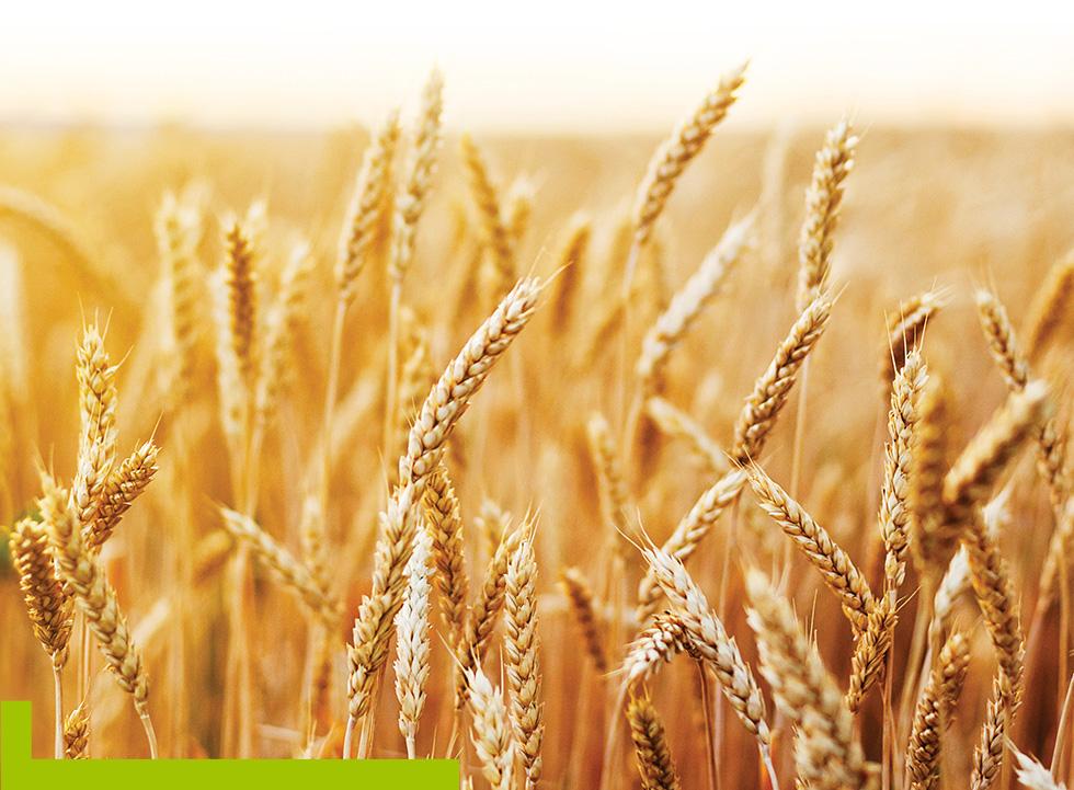 BIO ATTITUDE fabrique et commercialise des produits d'entretien écologiques